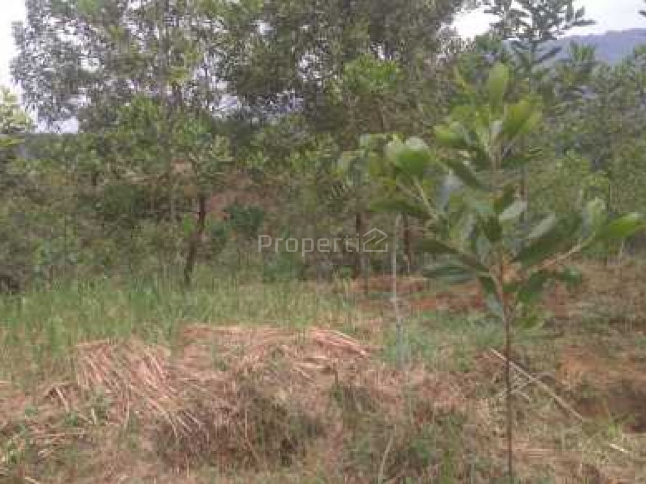 Tanah Hamparan Sangat Cocok untuk Perumahan, Villa atau Resort, Jawa Barat