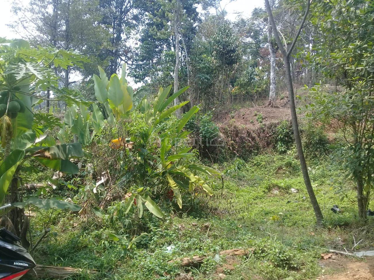 Lahan 5 Ha Peruntukan Perumahan di Ciapus, Jawa Barat