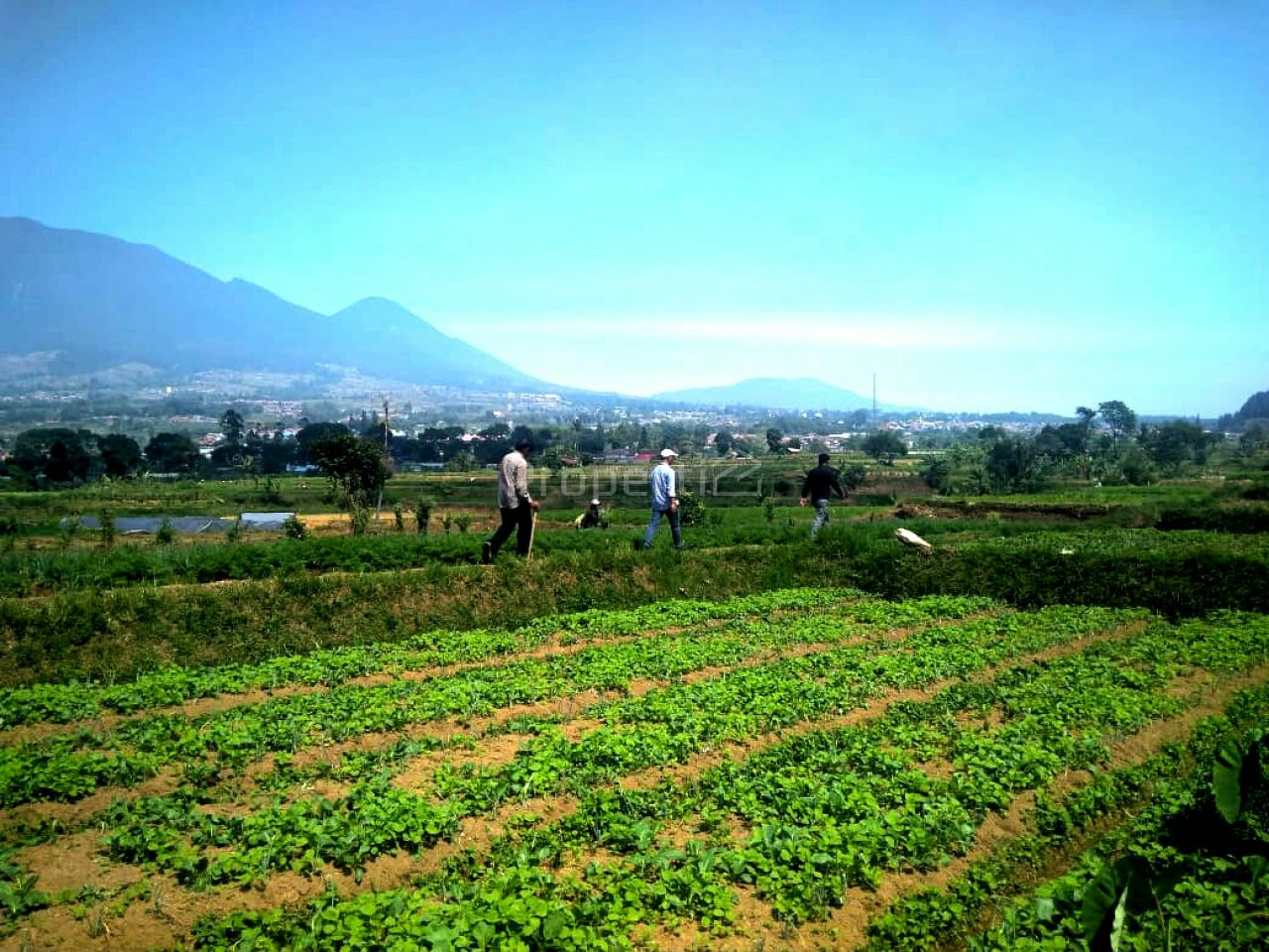 Land of Investment 30 Ha in Cianjur, West Java, Kab. Cianjur