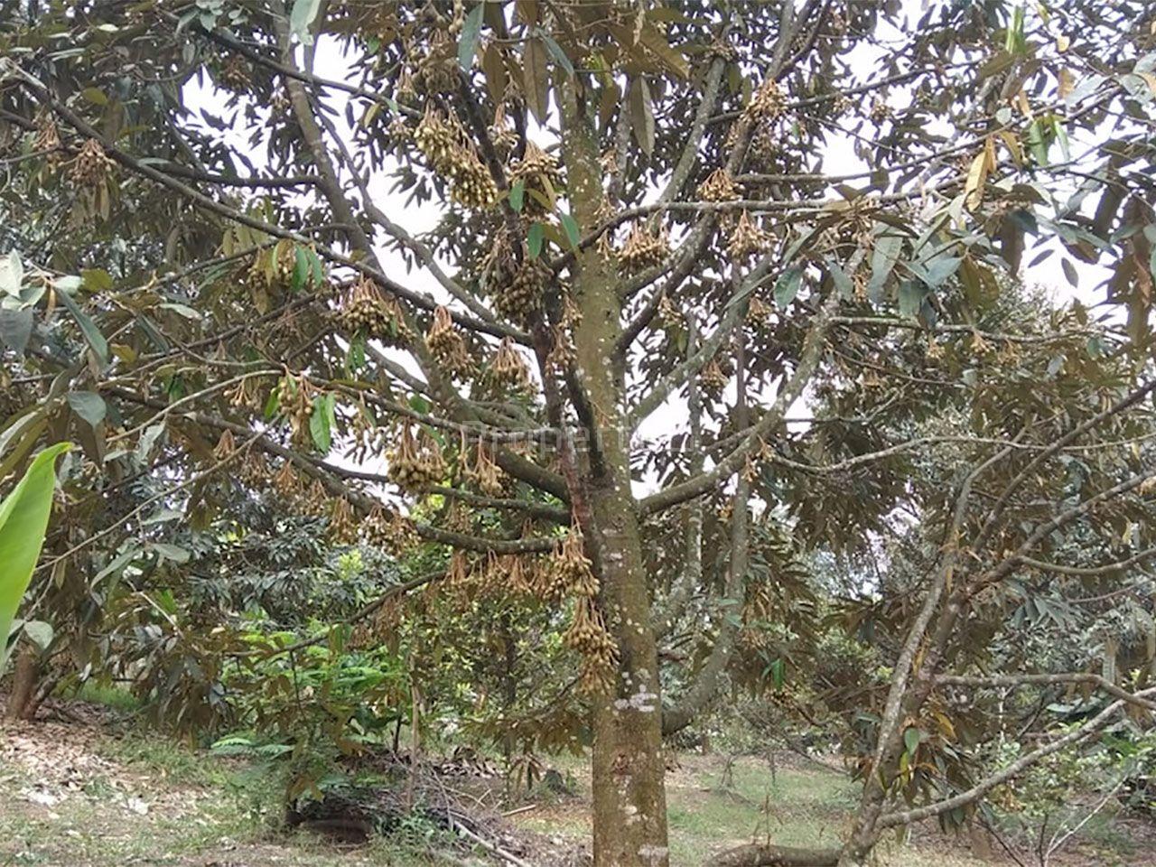 Lahan Investasi 2,5 Ha di Cigudeg, Bogor, Jawa Barat