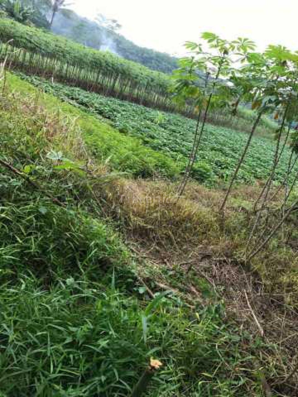 Lahan Peruntukan Perumahan di Ranca Bungur, Jawa Barat