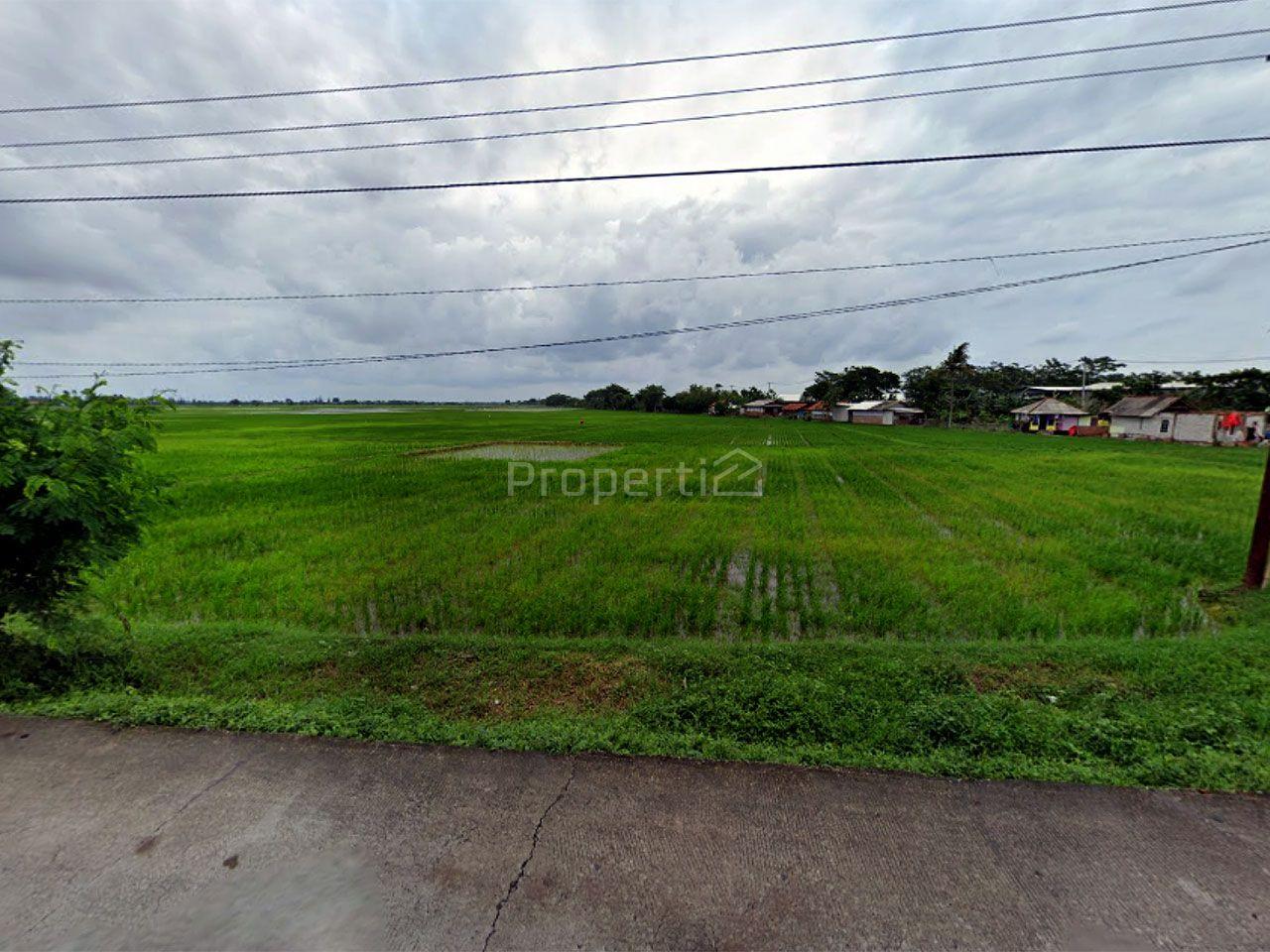 Rice Fields in Sukadarma Village, Jawa Barat