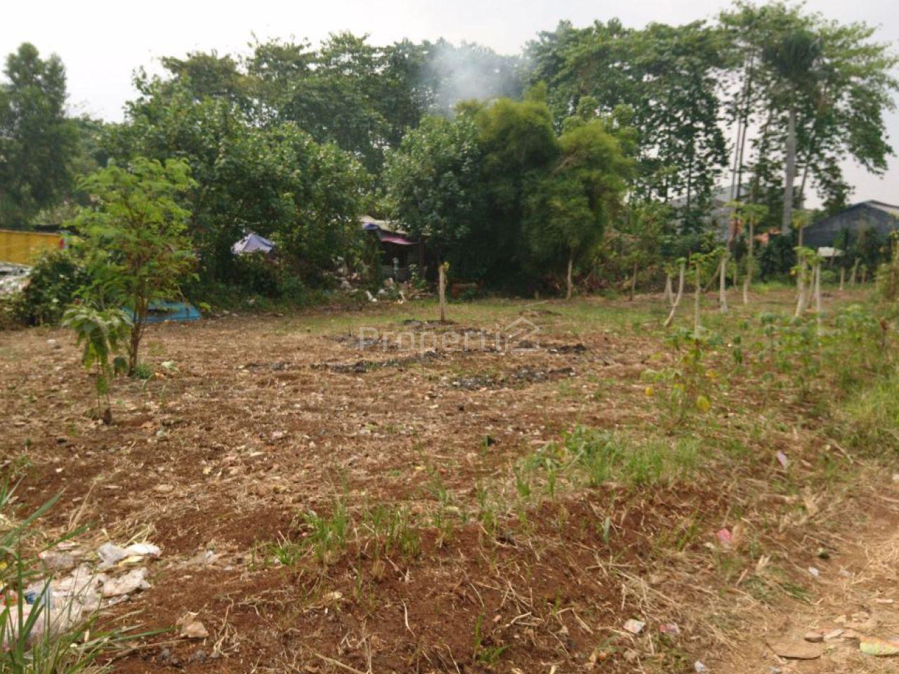 Tanah Datar Cocok untuk Cluster, Kemiri