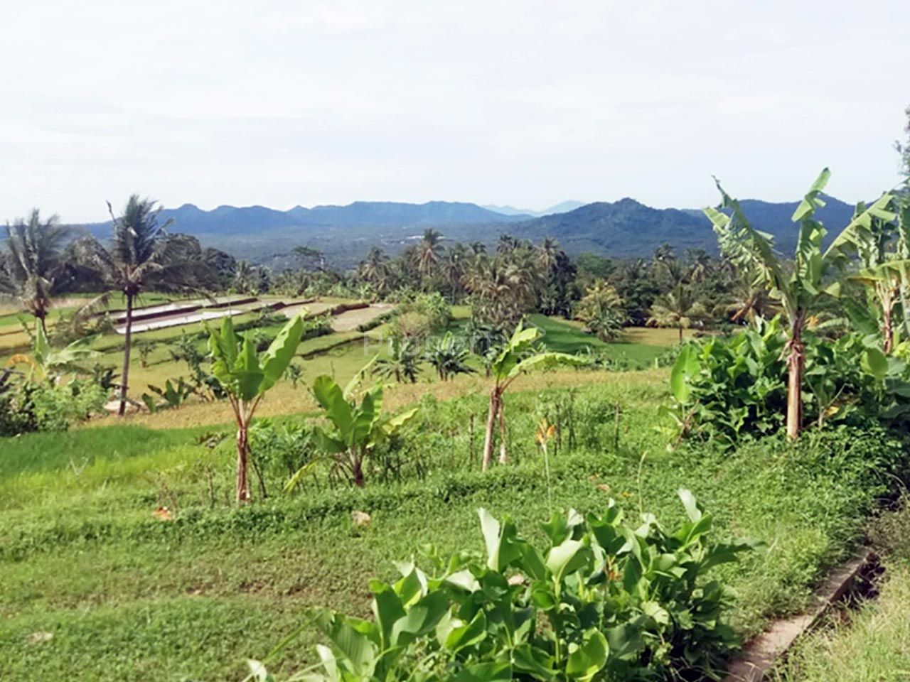 Lahan Investasi 50 Ha di Cariu, Jawa Barat