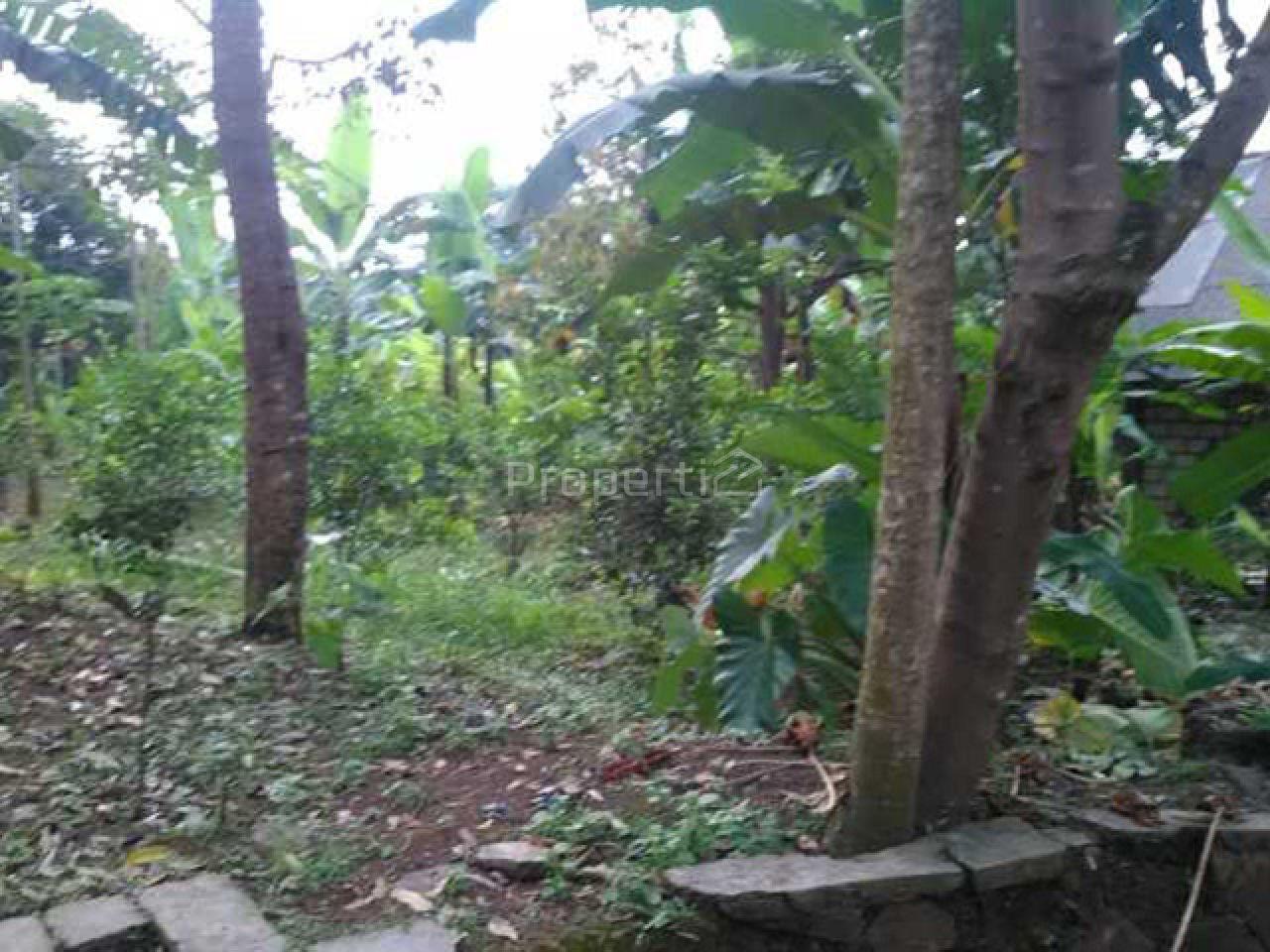 Lahan Investasi di Ciapus, Jawa Barat