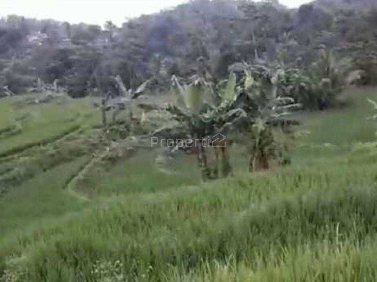 Lahan Investasi di Cigudeg, Kab. Bogor