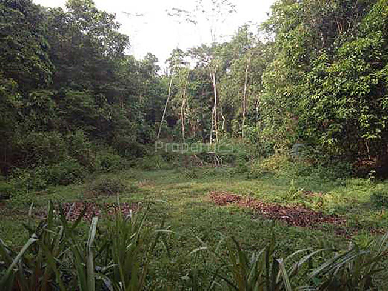 Lahan Siap Garap di Rangkasbitung, Banten