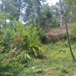 Land 5 Ha for Housing in Ciapus