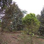 Lahan Investasi 2,5 Ha di Cigudeg, Bogor