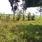 Lahan Perumahan di Cikahuripan, Bogor