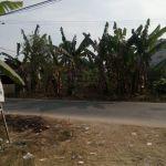 Tanah Kavling Depan Jalan Raya di Sodong, Tigaraksa