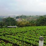Tanah Sawah di Pandanrejo, Kota Batu
