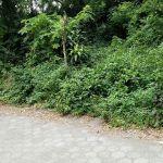 Tanah Siap Bangun di Condongcatur, Yogyakarta