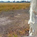 Tanah Komersial di Pinggir Jalan Tol Waru - Juanda