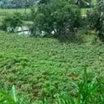 Lahan Investasi di Bogor