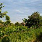 Lahan Peruntukan Perumahan di Meruya Selatan