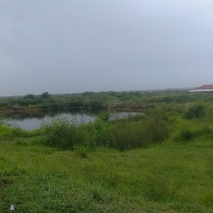 Tanah Sawah 2,4 Ha di Brebes